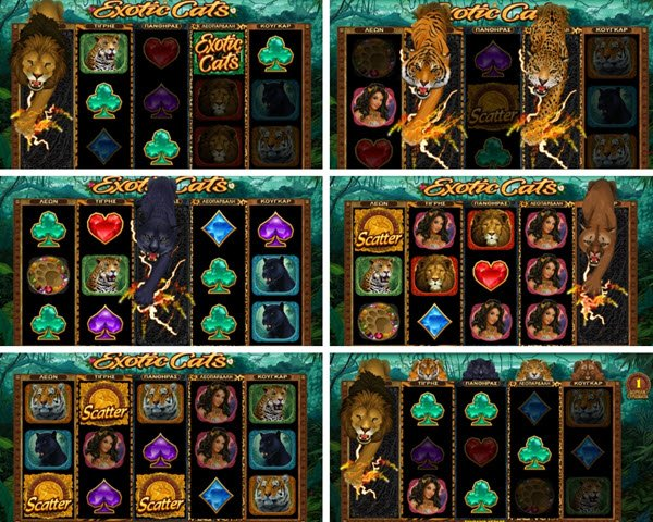 wild symbola, scatter kai free spins sto exotic cats slot-froytakia microgaming