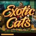 Φρουτάκι Exotic Cats της Microgaming